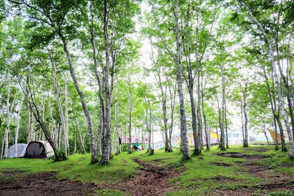 夏レジャーの定番・ハイキング中に遭難したら?捜索費用や知っておきたい遭難の現状